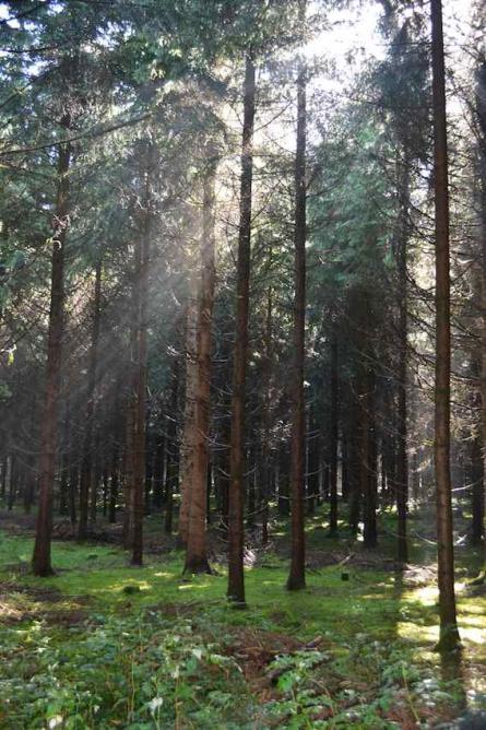 Ses forêts
