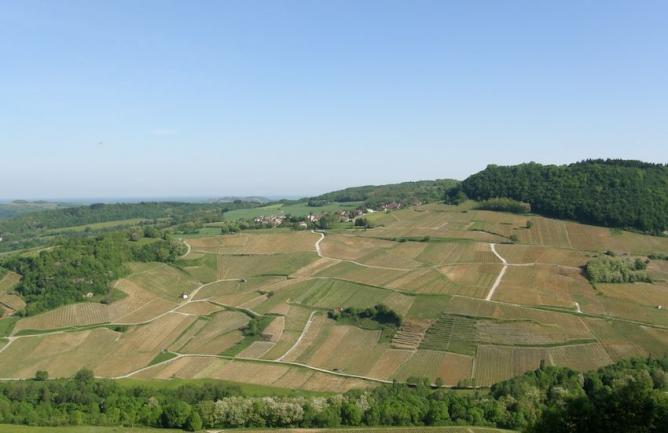vignobles-de-chateau-chalon-menetru.jpg